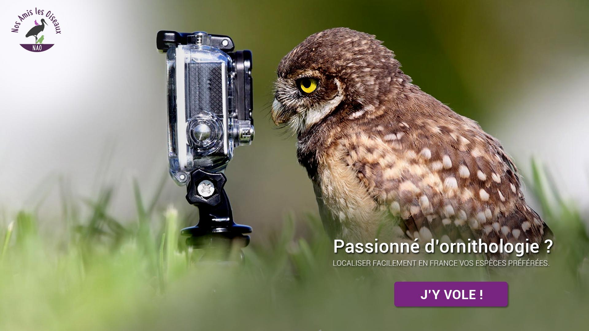 Site Web NAO Nos amis les oiseaux